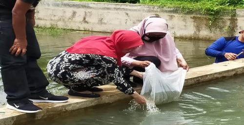 Hasil Ternak Kurang, Disnakkan Ciamis Dorong Budidaya Ikan